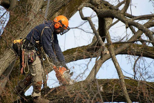 Спил деревьев, обрезка веток!