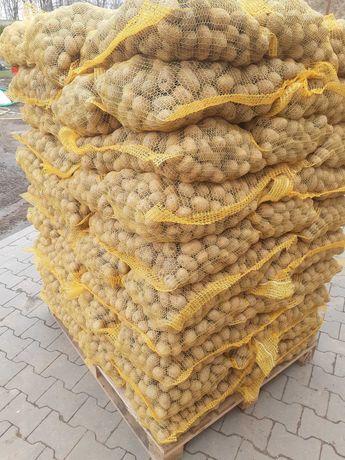 Ziemniaki gala kal 30mm-45mm jak sadzeniak do obieraczki 20 ton