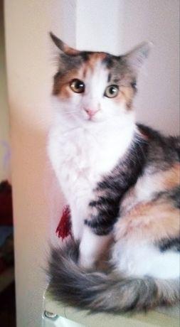 Кошка (подросток)