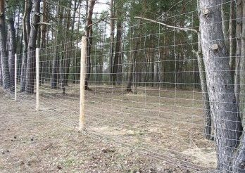 Siatka ogrodzeniowa - Siatka Leśna M 160/15/30 , Banaszewski