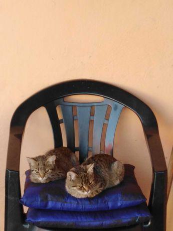 Koty młode