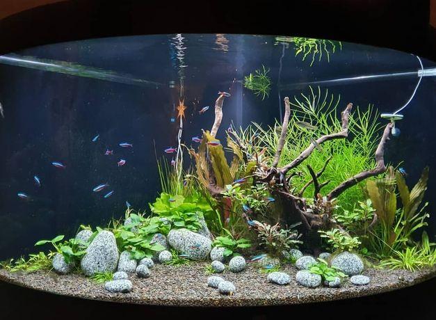Обслуживание аквариумов.Услуги аквариумиста.
