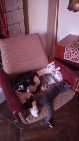 Віддам котиків в добрі руки!