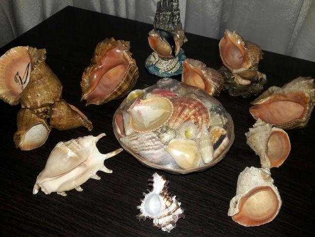 Ракушки океанические,  морские. Набор ракушек. Коллекция ракушек.