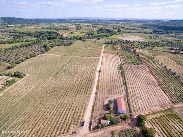Quinta com vinha a 3 km da Vidigueira