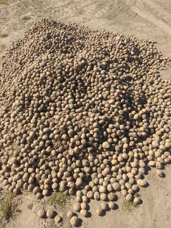 Odpady z ziemniakami