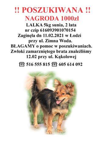 Poszukiwana sunia 23.02 o widziana była w okolicy szpitala Kochanowka!