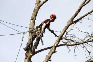 Подрезка веток, удаление деревьев