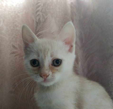 Отдадим в хорошие руки котенка девочку Львов