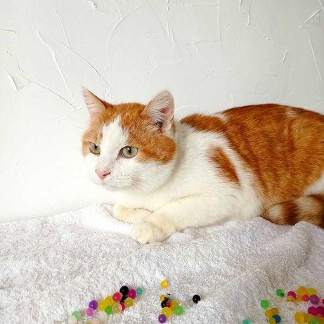 Спокойный и ласковый рыжий кот ищет дом