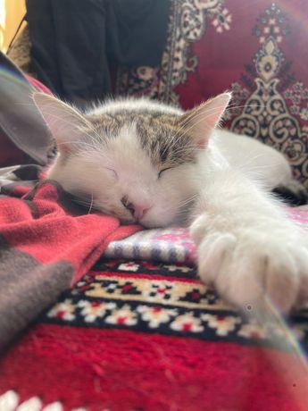 Кошка белая с серим