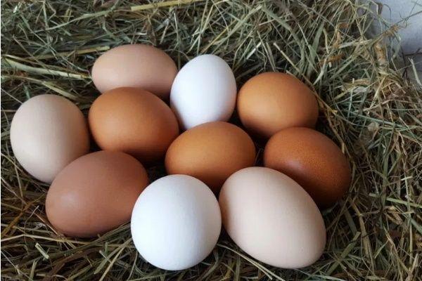 Świeże jajka wiejskie, jajka kurze, jajko domowe