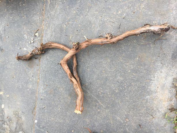 Ramos para fazer bonsais por ex entre  em contato para saber preços