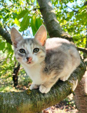 Котята/котёнок/котики/кошечки бесплатно