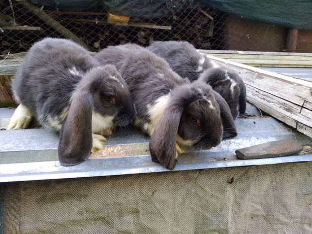Кролики поменяю на буряк.