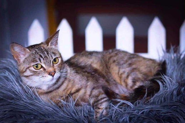 Mela - młoda, filigranowa kotka do adopcji