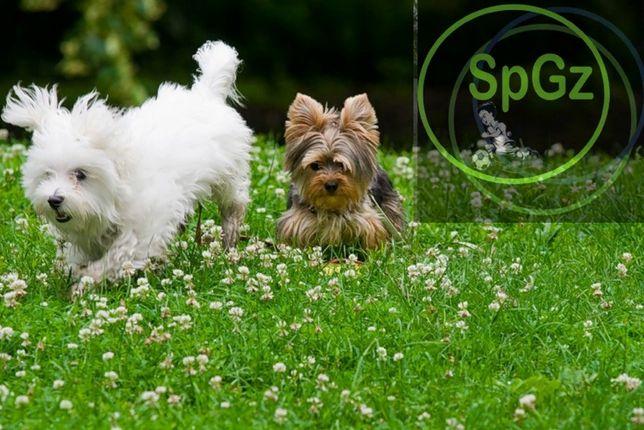 """""""DOG Grass""""- спортивно-игровой газон 1кг семена белый клевер 30%"""