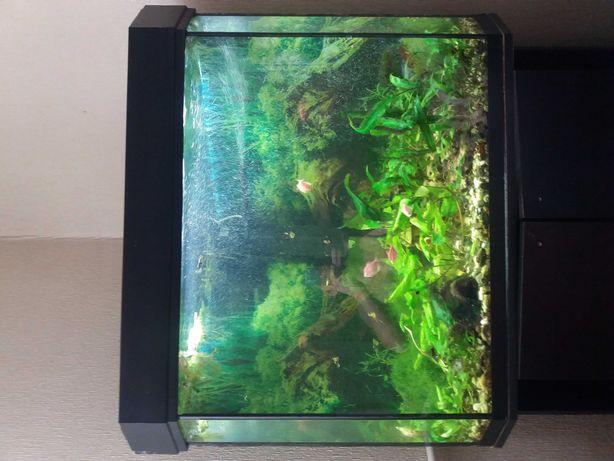 Акваріум  з тумбочкою  150 літрів