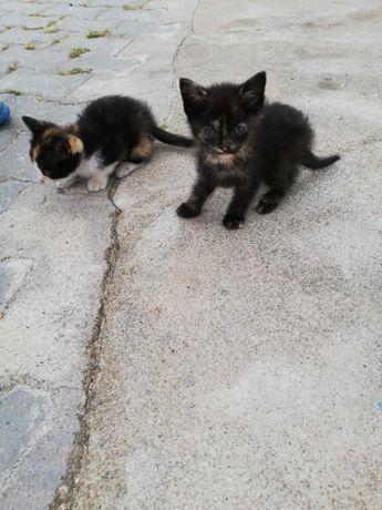 Doar gatinhos para adopção responsável