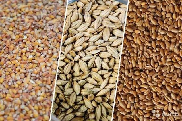 Продам зерно кукурузы ,пшеницы и ячменя