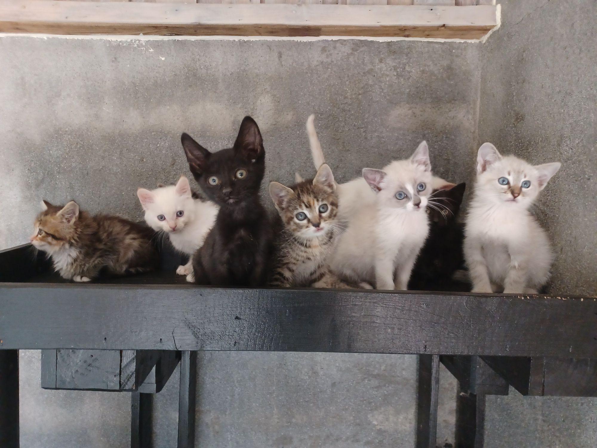Gatos bebes para adoção
