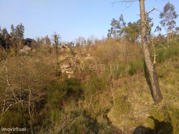 Terreno rústico com 5.000 m2 em Freitas