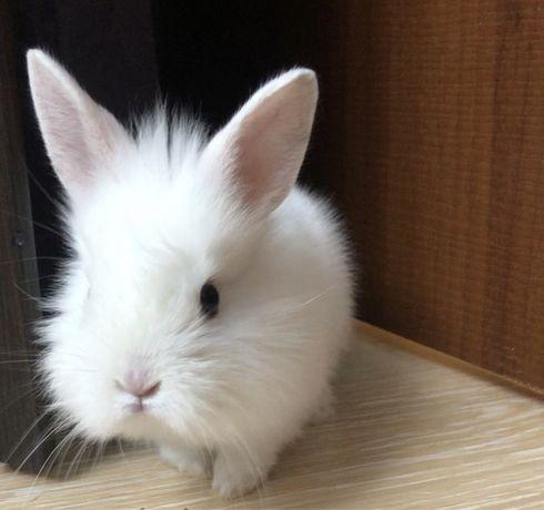 Декоративный белый кролик домашний