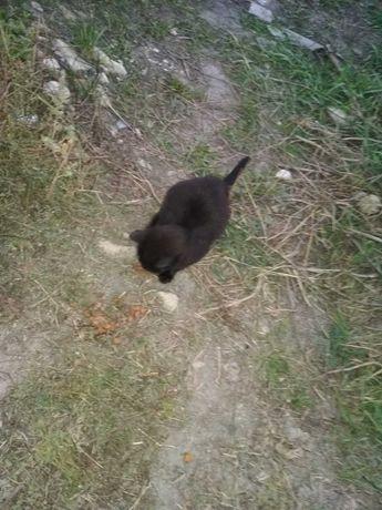 котенок черный в добрые руки