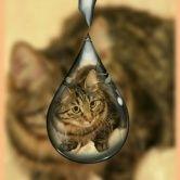 Котенок для себя ШОУ Класса