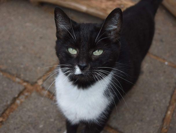 Kotka Doris o magnetyzującym spojrzeniu szuka domu