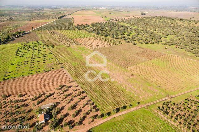 Vinha com 2,675 ha para investimento | Granja (Mourão)