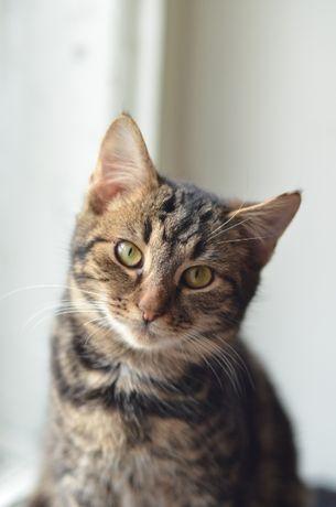 кот нестандартного окраса в поисках семьи!