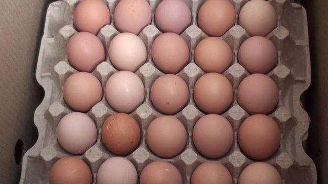 Інкубаційне яйце іспанки голошия від 30 штук