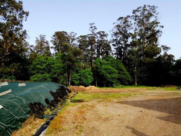 Terreno com pavilhão para aluguer