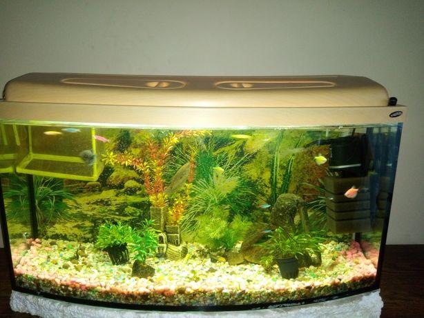 Akwarium 100 l + rybki