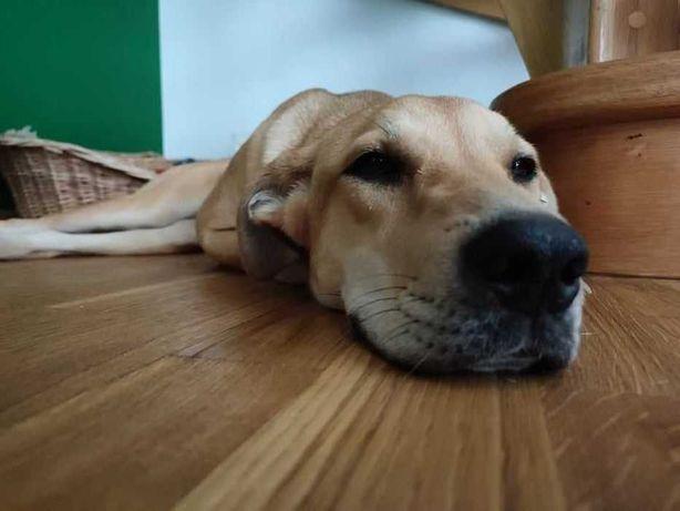 Poszukiwany dom dla porzuconego psa