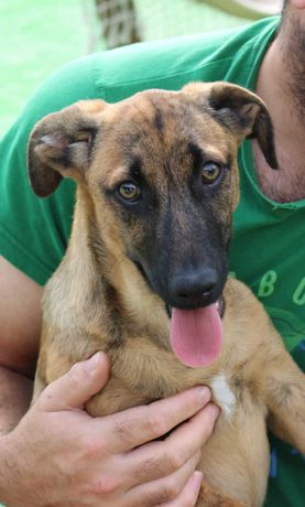Cachorro  4 meses para adoção  consciente