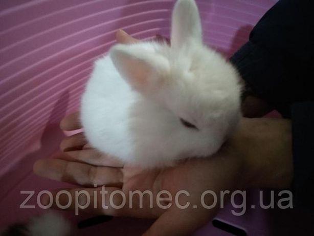Декоративные карликовые кролики