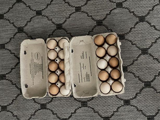 Wiejskie jaja z wolnego wybiegu
