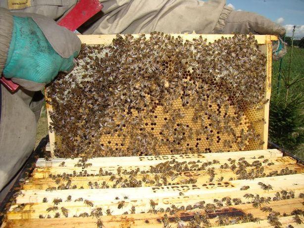 Zamówienia odkłady pszczele dadant i wielkopolskie 2021 rok faktura