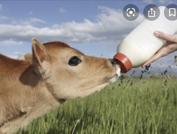 Молоко для с/г тварин Не замінник Не на сої ЦІНА за 25кг