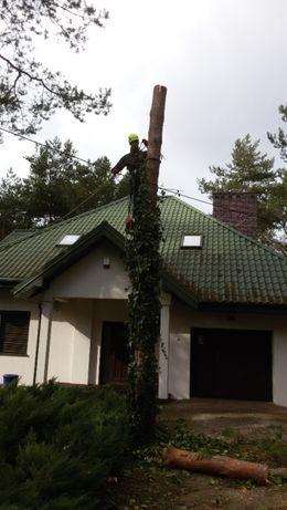 Wycinka drzew /alpinistycznie /z podnośnika