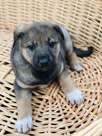 Отдам щенка мальчика Чип 2 месяца