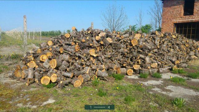 Drewno opałowe co kominkowe jabłoń do wędzenia owocowe jabłonkowe