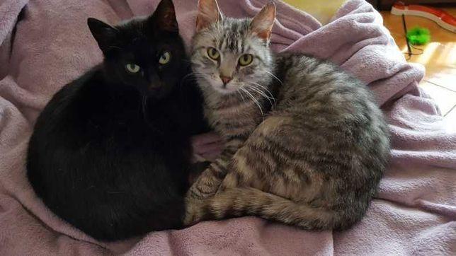 Szarusia i Czarusia szukają wspólnego domku