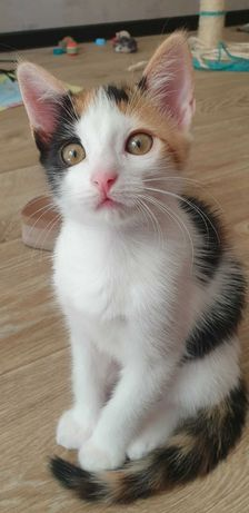 Счастье - даром (котята, котенок)