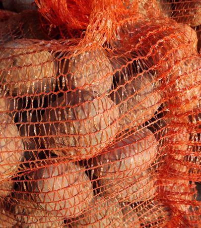 Ziemniaki jadalne Bellarosa