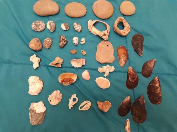 Морские ракушки разных размеров( 30 штук)