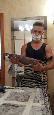 Стрижка котов ,кошек 200грн ,есть выезд!