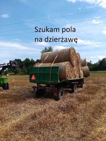 Zadzierzawie pole